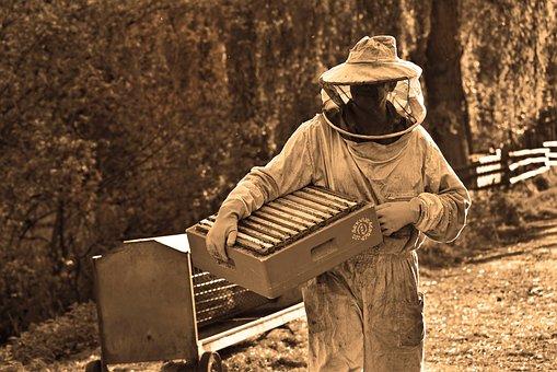 U Solonovom zakoniku postoje odredbe koje se odnose na pčelarstvo